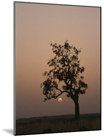 Baobab Tree (Adansonia Digitata) Silhouetted by the African Sunset-Bobby Model-Mounted Photographic Print