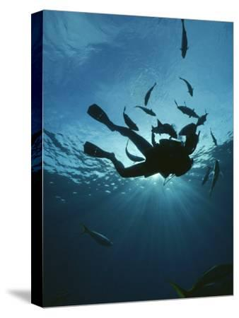 Fish Swim Around a Diver-Raul Touzon-Stretched Canvas Print