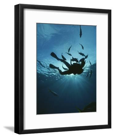 Fish Swim Around a Diver-Raul Touzon-Framed Photographic Print