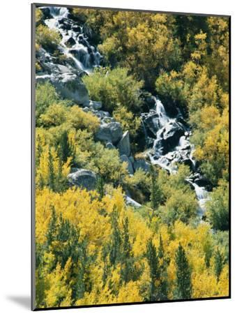 Waterfall and Aspen Fall Colors in the High Sierra in October-Rich Reid-Mounted Photographic Print