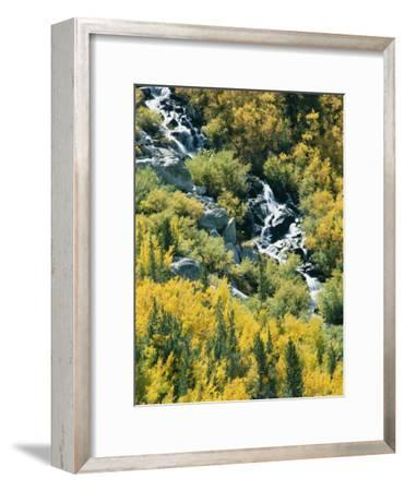 Waterfall and Aspen Fall Colors in the High Sierra in October-Rich Reid-Framed Photographic Print