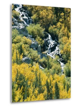 Waterfall and Aspen Fall Colors in the High Sierra in October-Rich Reid-Metal Print