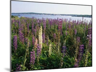Maine Wetlands-Stephen St^ John-Mounted Photographic Print