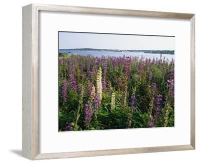 Maine Wetlands-Stephen St^ John-Framed Photographic Print