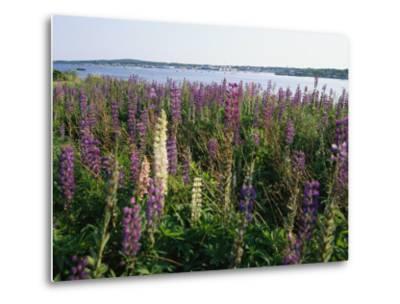 Maine Wetlands-Stephen St^ John-Metal Print
