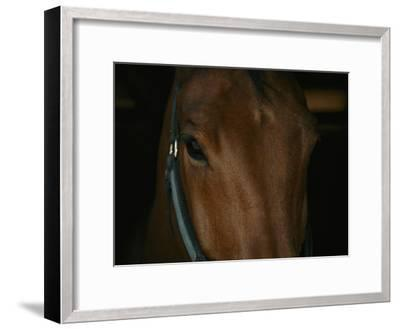 Close View of the Head of a Bay Horse-Stacy Gold-Framed Photographic Print