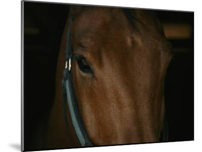 Close View of the Head of a Bay Horse-Stacy Gold-Mounted Photographic Print