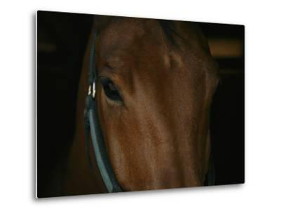 Close View of the Head of a Bay Horse-Stacy Gold-Metal Print