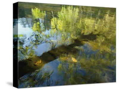 Trees Reflected in the Water-David Boyer-Stretched Canvas Print