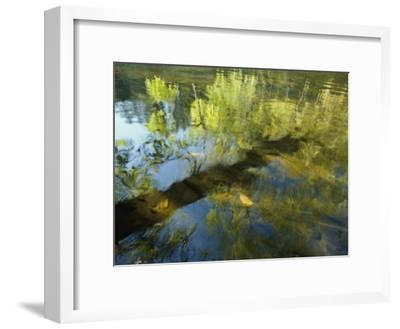 Trees Reflected in the Water-David Boyer-Framed Photographic Print