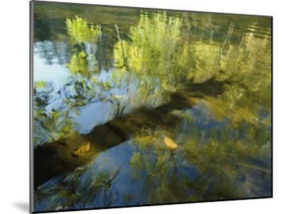 Trees Reflected in the Water-David Boyer-Mounted Photographic Print