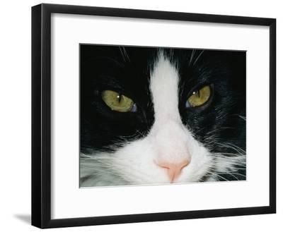 Close View of a Black and White Tabby Cat-Brian Gordon Green-Framed Photographic Print