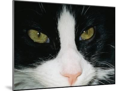 Close View of a Black and White Tabby Cat-Brian Gordon Green-Mounted Photographic Print