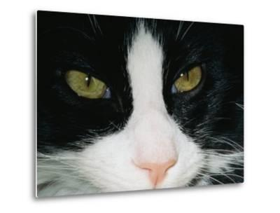 Close View of a Black and White Tabby Cat-Brian Gordon Green-Metal Print