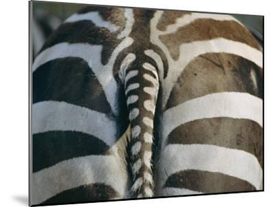 Close View of a Grants Zebras Rear End-Joel Sartore-Mounted Photographic Print