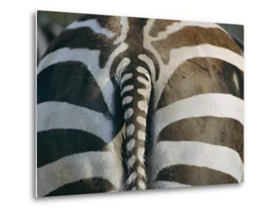 Close View of a Grants Zebras Rear End-Joel Sartore-Metal Print