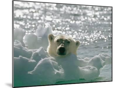 A Polar Bear in the Water Peers up over a Chunk of Ice-Norbert Rosing-Mounted Photographic Print