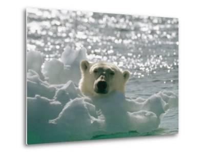 A Polar Bear in the Water Peers up over a Chunk of Ice-Norbert Rosing-Metal Print