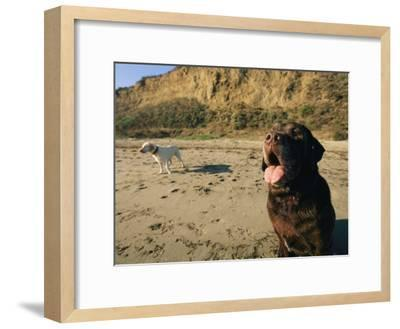 Two Dogs Take a Breather on the Beach-Roy Toft-Framed Photographic Print