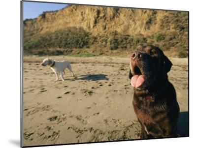Two Dogs Take a Breather on the Beach-Roy Toft-Mounted Photographic Print