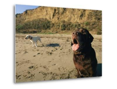 Two Dogs Take a Breather on the Beach-Roy Toft-Metal Print