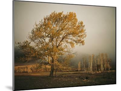 Golden Sunlit Tree in the Mist-Sisse Brimberg-Mounted Photographic Print