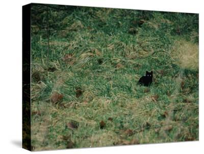 A Black Cat-Stephen Alvarez-Stretched Canvas Print