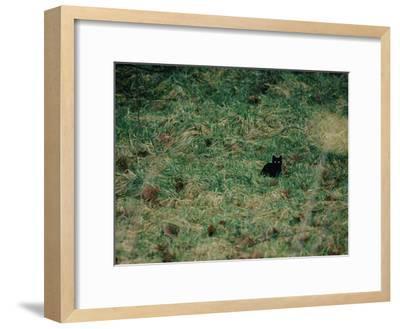 A Black Cat-Stephen Alvarez-Framed Photographic Print