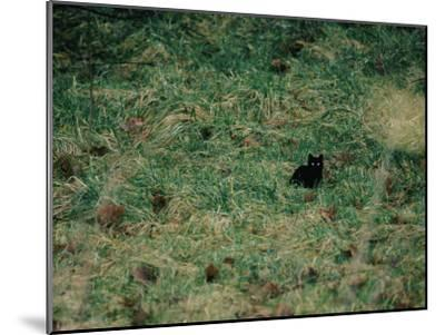 A Black Cat-Stephen Alvarez-Mounted Photographic Print