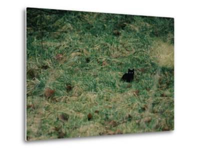 A Black Cat-Stephen Alvarez-Metal Print