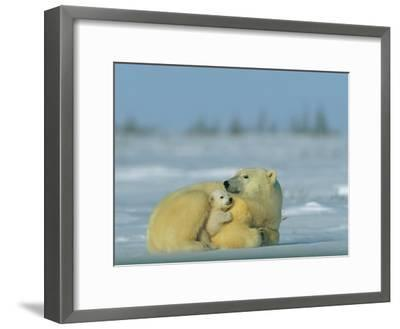 Mother and Cub Polar Bear Nestle Together for Warmth in the Arctic Landscape-Norbert Rosing-Framed Photographic Print
