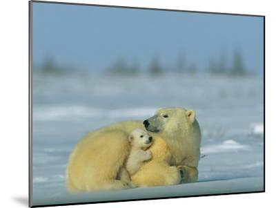 Mother and Cub Polar Bear Nestle Together for Warmth in the Arctic Landscape-Norbert Rosing-Mounted Photographic Print