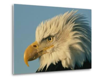 Profile View of a Bald Eagle-Norbert Rosing-Metal Print
