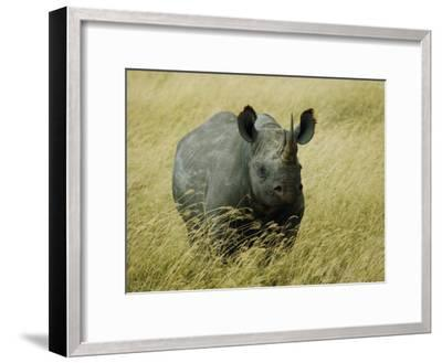 A Straight on View of a Rhinoceros in a Field of Tall Grass-Todd Gipstein-Framed Photographic Print