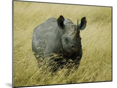 A Straight on View of a Rhinoceros in a Field of Tall Grass-Todd Gipstein-Mounted Photographic Print