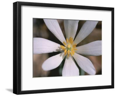 A Close View of a Spring Flower-Taylor S^ Kennedy-Framed Photographic Print