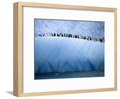 Chinstrap Penguins Lined up Along a Blue Iceberg-Ralph Lee Hopkins-Framed Photographic Print