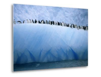 Chinstrap Penguins Lined up Along a Blue Iceberg-Ralph Lee Hopkins-Metal Print