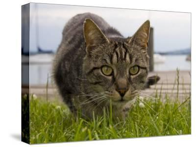 A Close View of a Cat-Taylor S^ Kennedy-Stretched Canvas Print