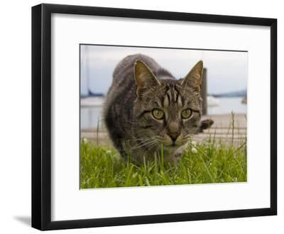 A Close View of a Cat-Taylor S^ Kennedy-Framed Photographic Print