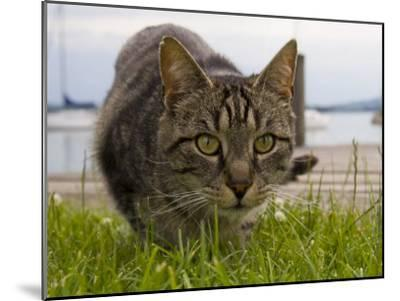 A Close View of a Cat-Taylor S^ Kennedy-Mounted Photographic Print