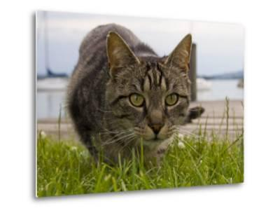 A Close View of a Cat-Taylor S^ Kennedy-Metal Print