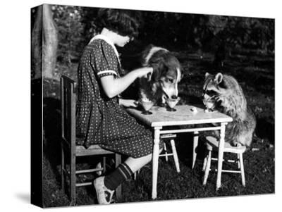 Claire Shorrock Giving Ice Cream Party with Pet Dog and Raccoon--Stretched Canvas Print