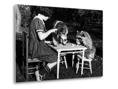 Claire Shorrock Giving Ice Cream Party with Pet Dog and Raccoon--Metal Print