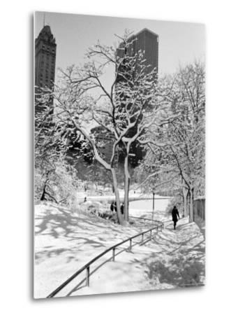 Central Park After a Snowstorm-Alfred Eisenstaedt-Metal Print