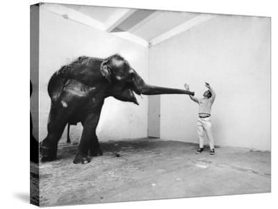 Life Photographer Arthur Schatz with Elephant While Shooting Story on the Franklin Park Zoo-Arthur Schatz-Stretched Canvas Print