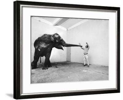 Life Photographer Arthur Schatz with Elephant While Shooting Story on the Franklin Park Zoo-Arthur Schatz-Framed Photographic Print