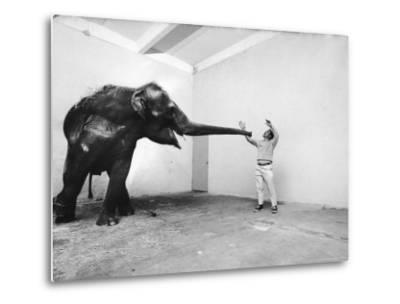 Life Photographer Arthur Schatz with Elephant While Shooting Story on the Franklin Park Zoo-Arthur Schatz-Metal Print