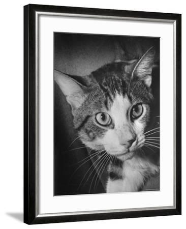 Cat Being Used by Scientists Conducting Psychology Testing at Brooklyn College-Nina Leen-Framed Photographic Print