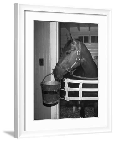 Citation in Stall-Tony Linck-Framed Photographic Print